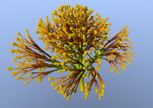 Hyper dimensional flower